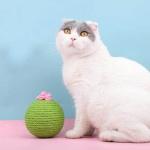 劍麻貓抓玩具 仙人掌貓抓球 一個入 貓咪玩具 其他 寵物用品速遞