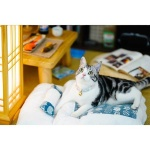日式寵物睡袋 可拆洗四季通用 M碼 (款式隨機) 貓犬用日常用品 床類用品 寵物用品速遞
