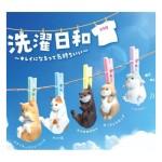 日本直送 公仔擺設 洗衣日 被晾曬的主子們 1套5隻- 限定品 生活用品超級市場 貓咪精品