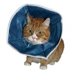 Buster 即棄型頭罩 Disposable Soft Collars (273384) 貓咪日常用品 其他 寵物用品速遞