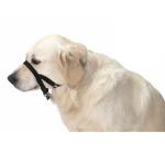 Buster 口罩 臘腸犬/聖伯納德狗 Blood Hound /St. Bernard (274790) 狗狗日常用品 其他 寵物用品速遞