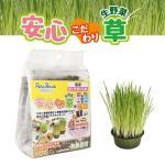貓咪保健用品-日本Petz-Route-100-有機培養土-安心貓草-2回分-貓咪去毛球-寵物用品速遞
