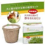 貓咪保健用品-日本GREEN-Labo-DIY-去毛球新鮮貓草-1個入-貓咪去毛球-寵物用品速遞